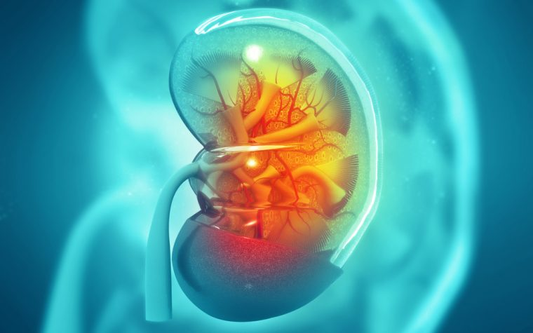 Hypoparathyroidism Patients on Hormone Therapy Should Be Monitored for Renal Calcium Deposits, Study Finds