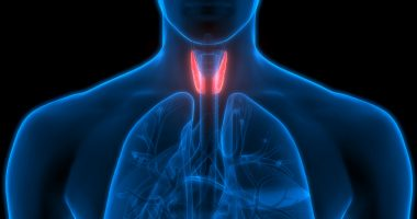 parathyroid recovery