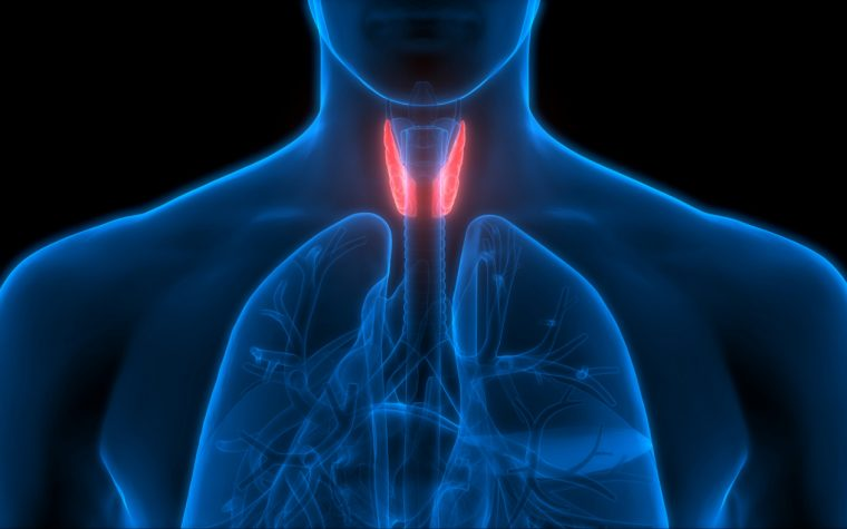 Chronic Hypoparathyroidism Due to Thyroid Surgery May Be Fairly Common